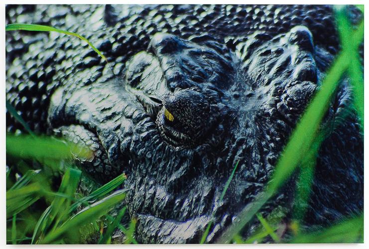 Metalwork Photography® The Bush