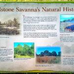 Natural History marker