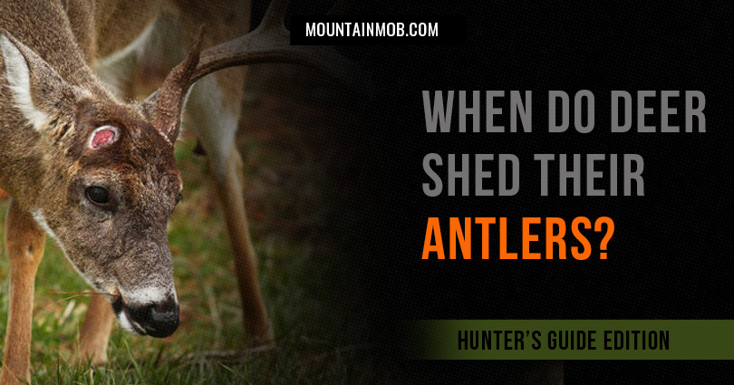 when do deer shed their antlers