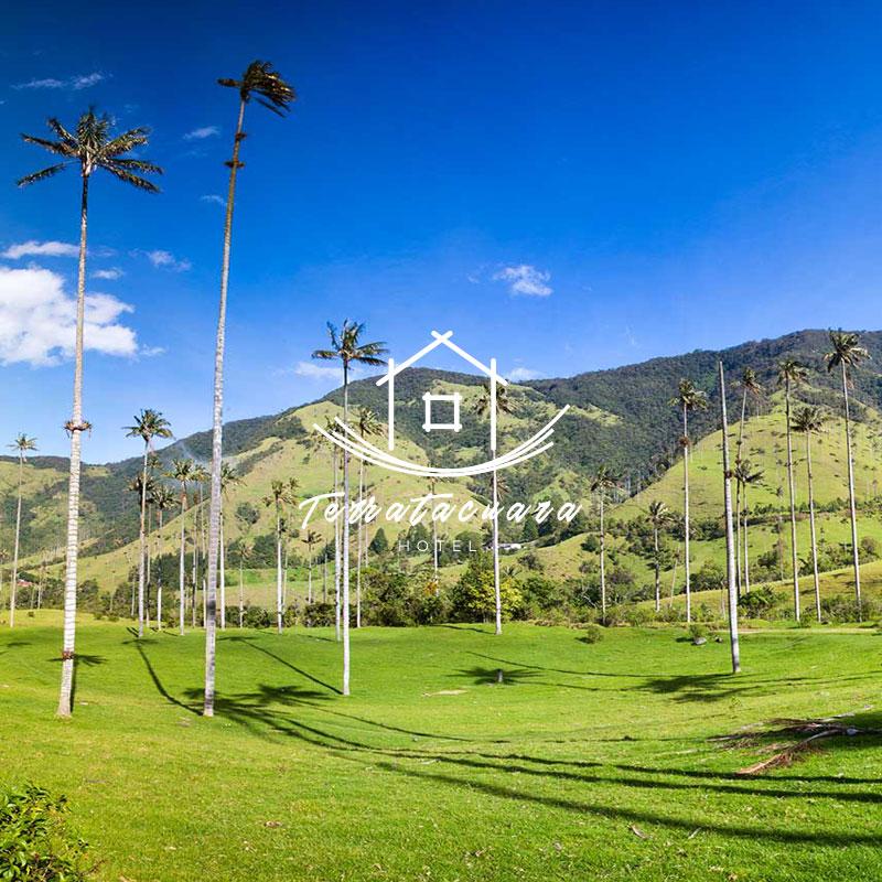 terratacuara-diseno-paginas-web-colombia-asisomos