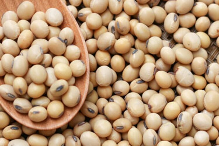 Soy: What's The Big Deal?