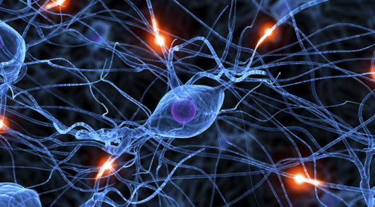 creatine brain