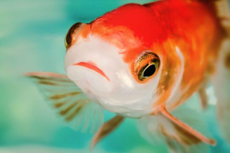 fish nervous and cowardly antidepressants