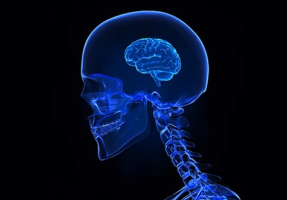 sugar and the brain
