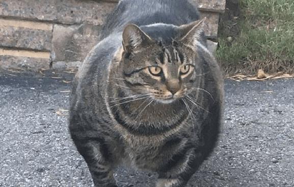 cat litter test booster