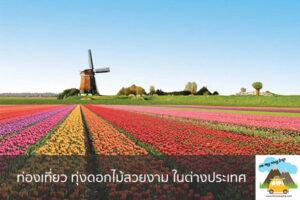 ท่องเที่ยว ทุ่งดอกไม้สวยงาม ในต่างประเทศ เที่ยวไหนดี จองตั๋วเครื่องบินราคาถูก คาเฟ่น่านั่ง เที่ยวต่างประเทศ 5ที่เที่ยว backpackแบ็คแพค