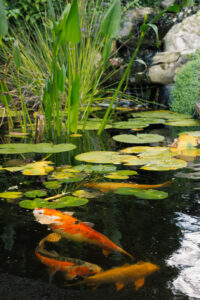 VA Waterscapes Koi Pond1