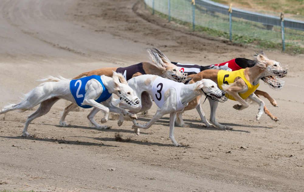 Greyhound-Events