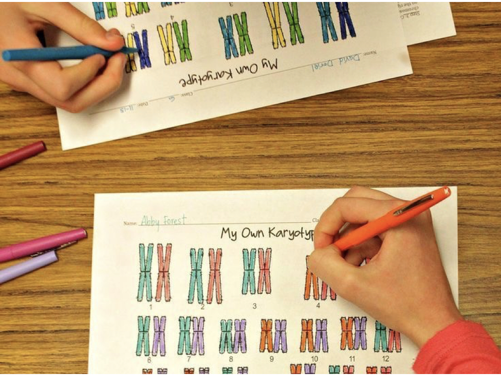 What does a human karyotype reveal?