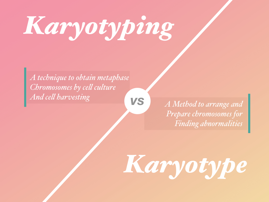 Karyotyping vs karyotype