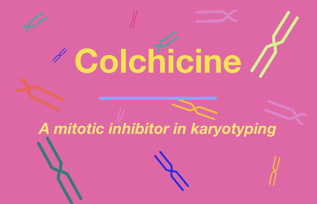 Role of colchicine in karyotyping