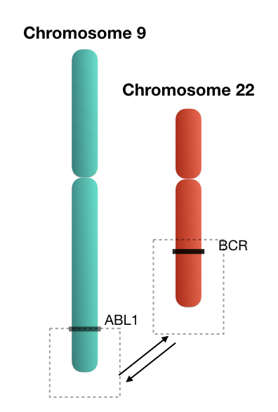 Translocation between chromosome 9 and 22.