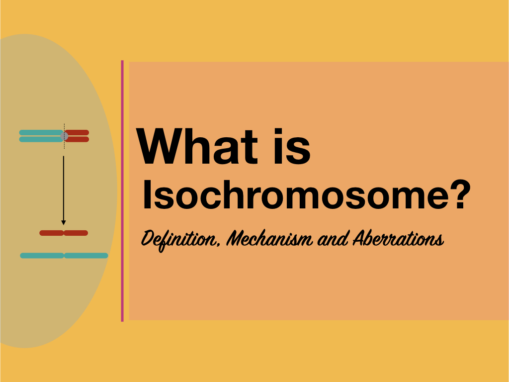 What is an Isochromosome?- Definition, Mechanism and Aberrations