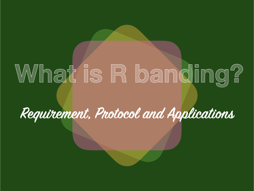 What is R banding?