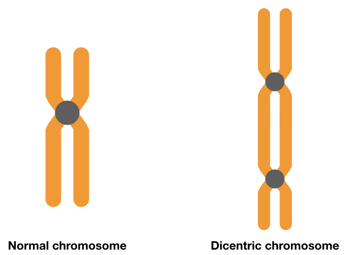 What is dicentric chromosome?