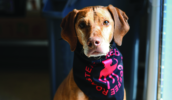 Red Dog Coffee Roasters cares for Vizsla, athletic communities