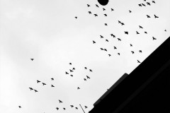 conformity is for the birds