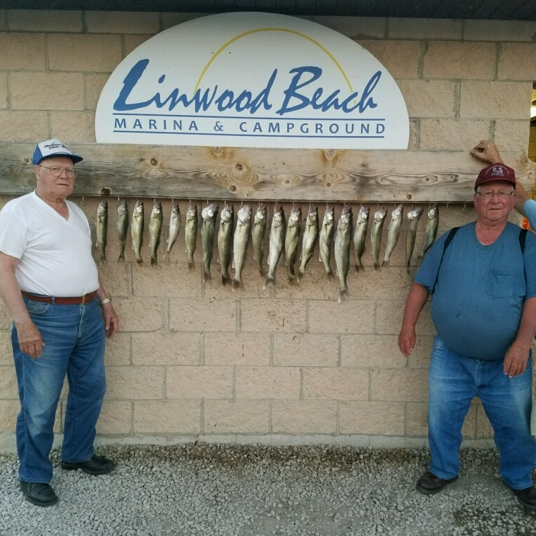 Linwood-Walleye