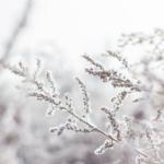 Online activities unfolding| Winter 21