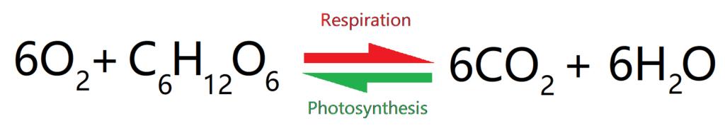 Photosynthesis + Respiration equation
