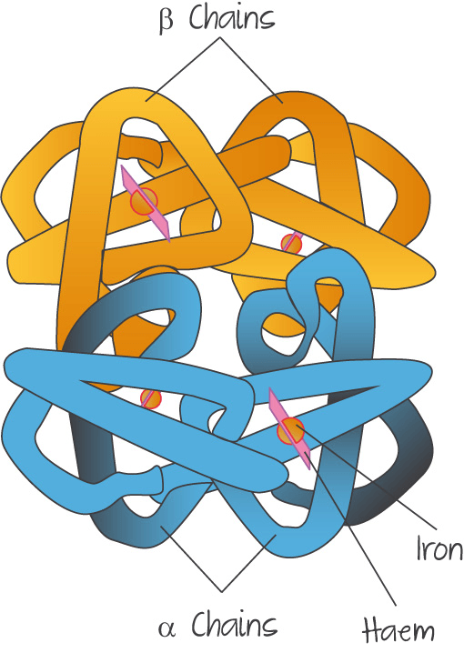 Quaternary structure (proteins)