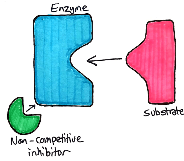 Non-competitive inhibitor
