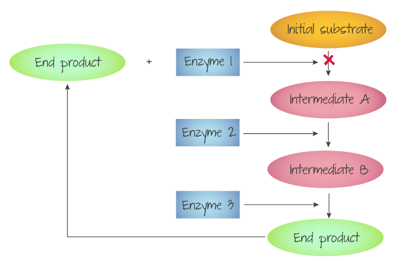 Product inhibition
