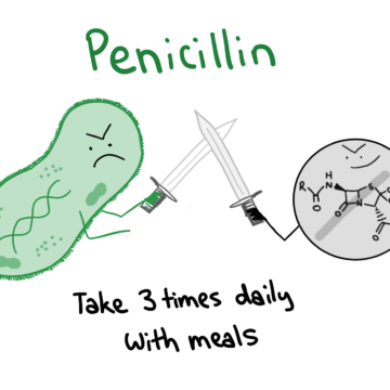 Penicillin antibiotics
