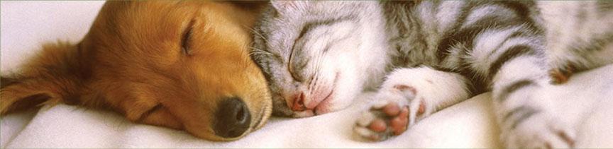 dog-cat-nap