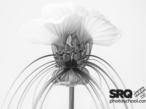 Botany in Black and White