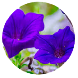Testmonila-Profile