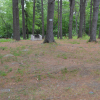 Site-3