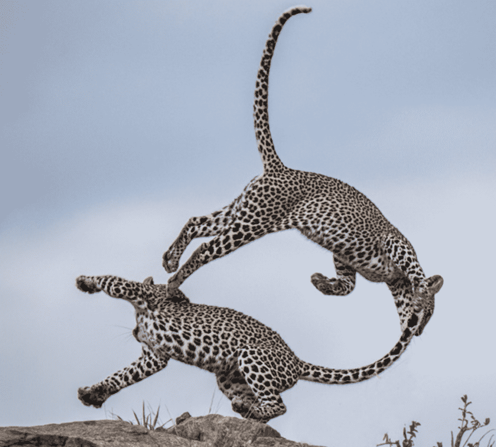 Karen Klopp Weekly Fave 5.  National Wildlife Foundation, 2020 Photo winners.