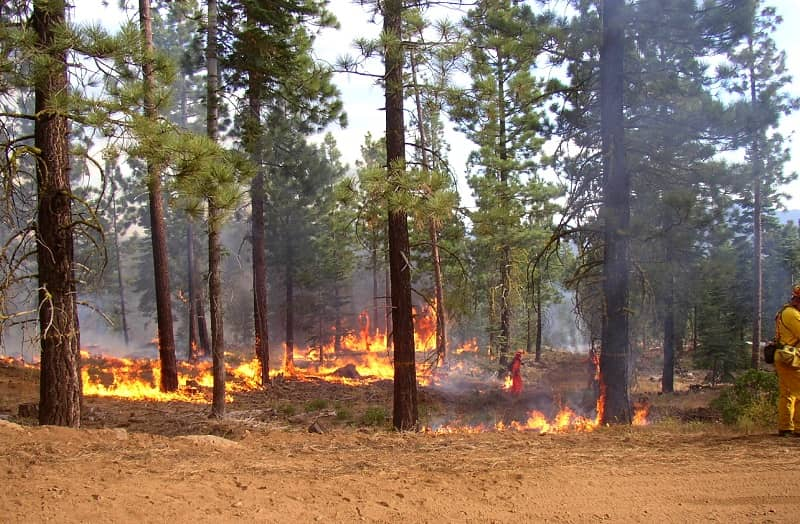 A forest with the blazing fire-cm