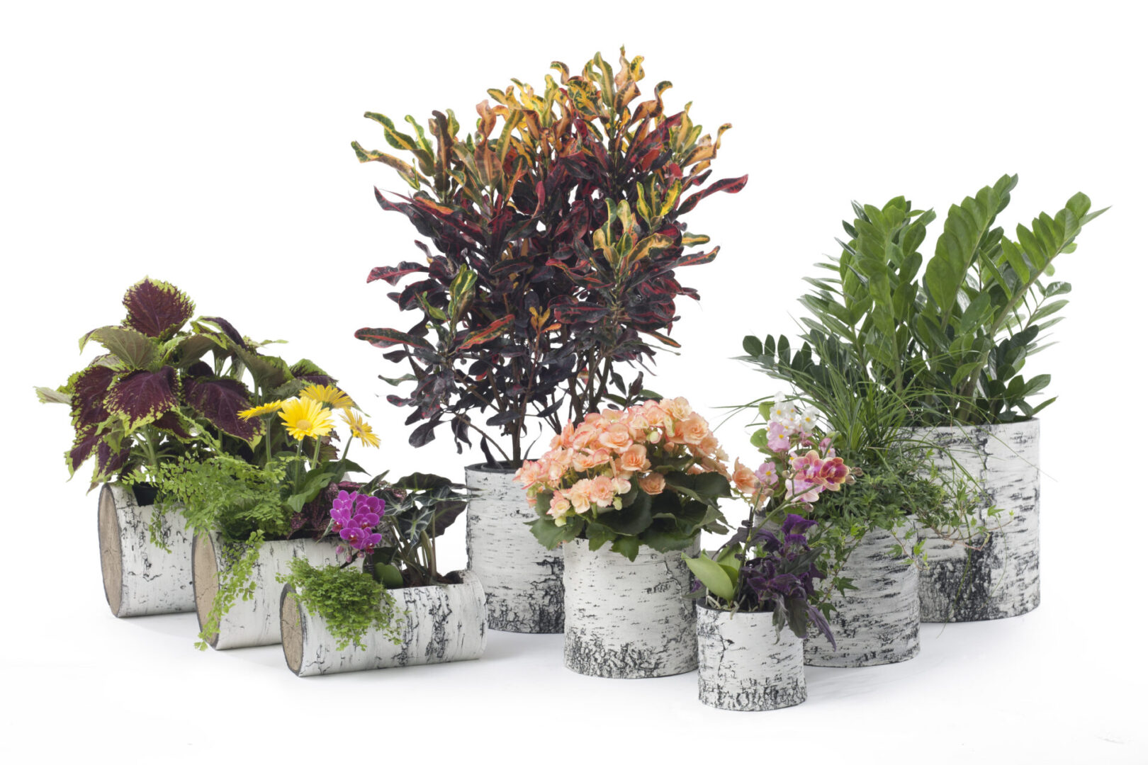 Surreal Planters – A Nature Innovations Brand