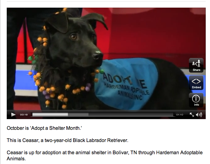 Adopt a Shelter Month on Live @ 9 ft. Ceasar