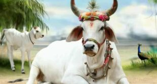 Why Cow called Mother ?