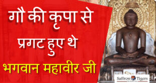 bhagwan-mahavir-was-revealed-by-the-grace-of-cow