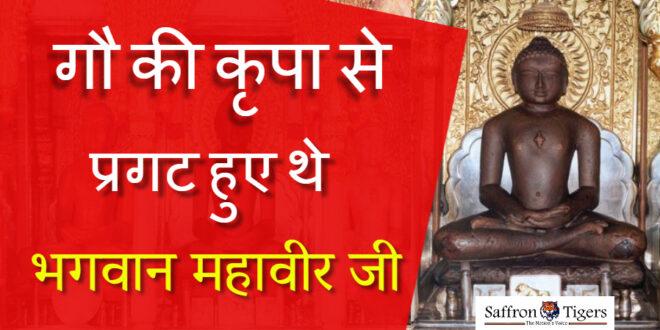 bhagwan-mahavir-was-revealed-by-the-grace-of-cow