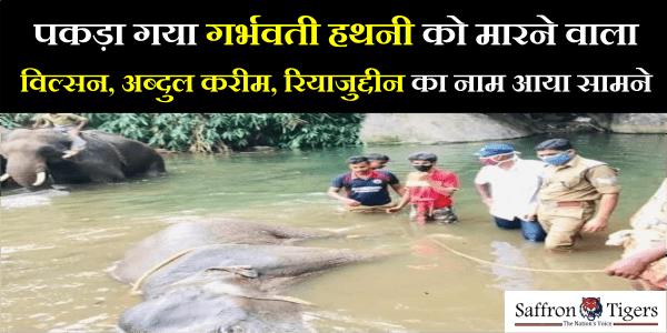 Elephant killed in kerala