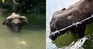 Brutual Death of elephant in kerela
