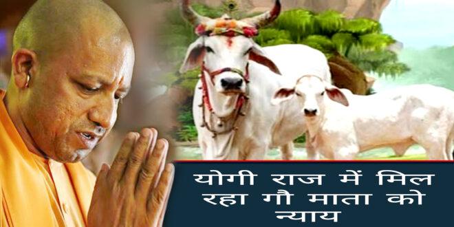 योगी राज में मिल रहा गौ माता को न्याय . . .