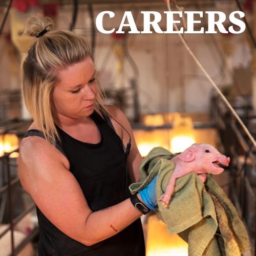 Careers at LEI