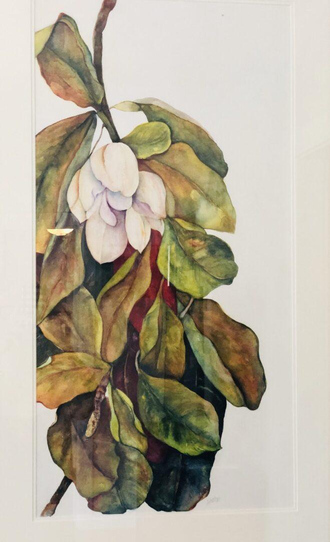 38x23 favorite magnolia