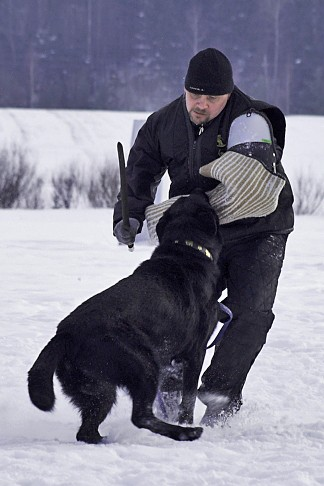 Schutzhun as a Sport by CC Protection Dogs