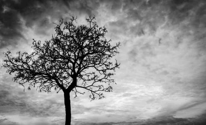 Black and white imagie of silhouette of dead tree on cloudy sky background.