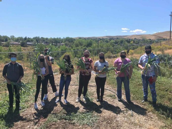 Six male and female students standing in a farm field holding bunches of greens from harvest.