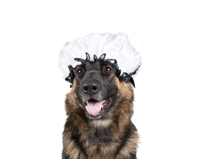 Black and brown dog wearing a white bonnet.