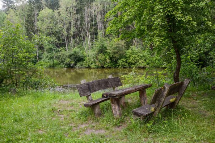 Wooden bench and table made from logs next to a lake in a green forest.