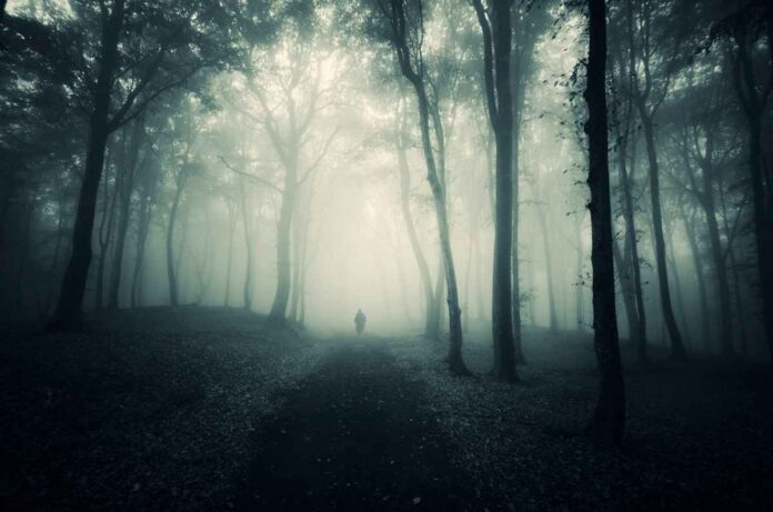 Man walking in a dark mysterious forest with fog.